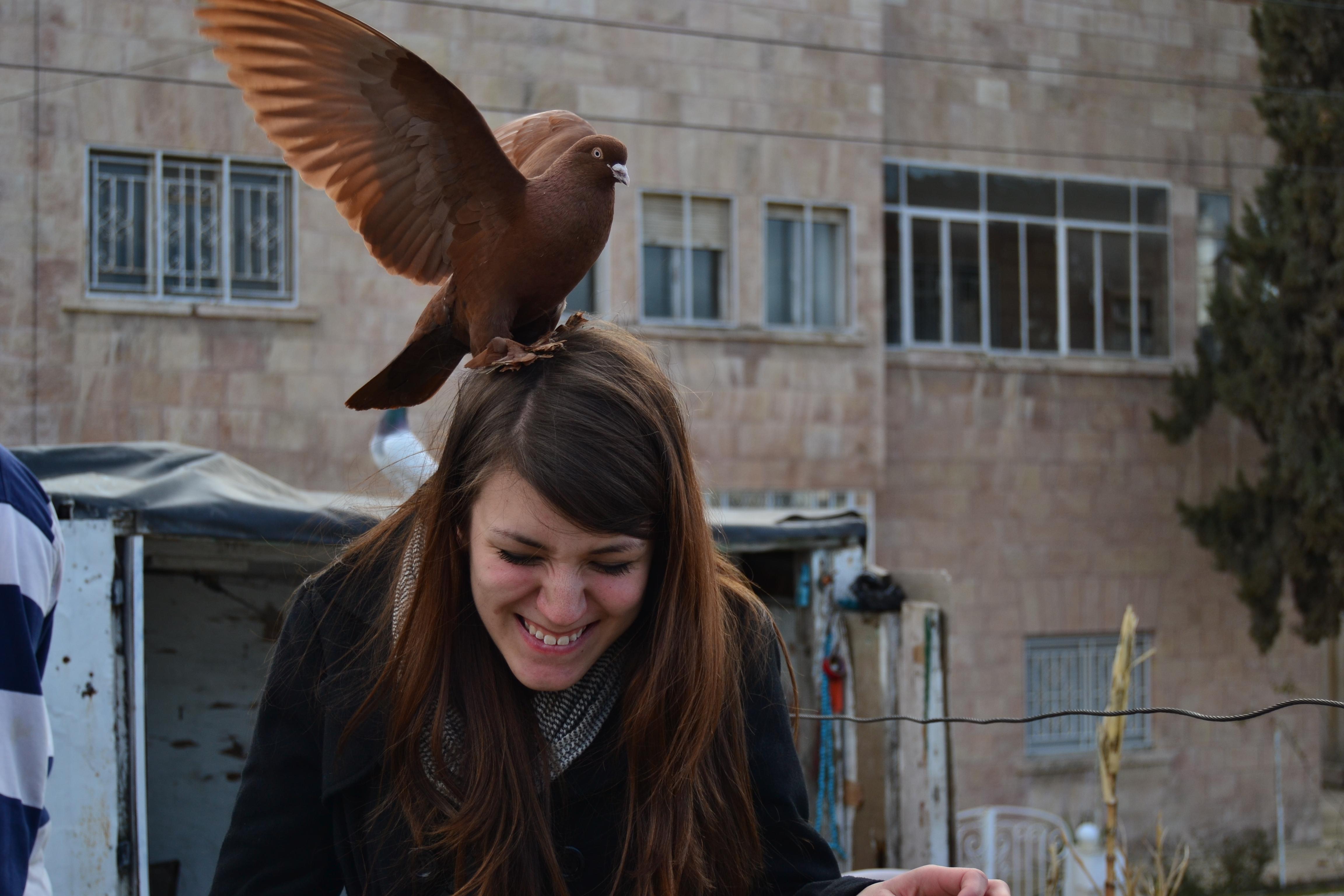 pigeon landing on head isa study abroad student blog