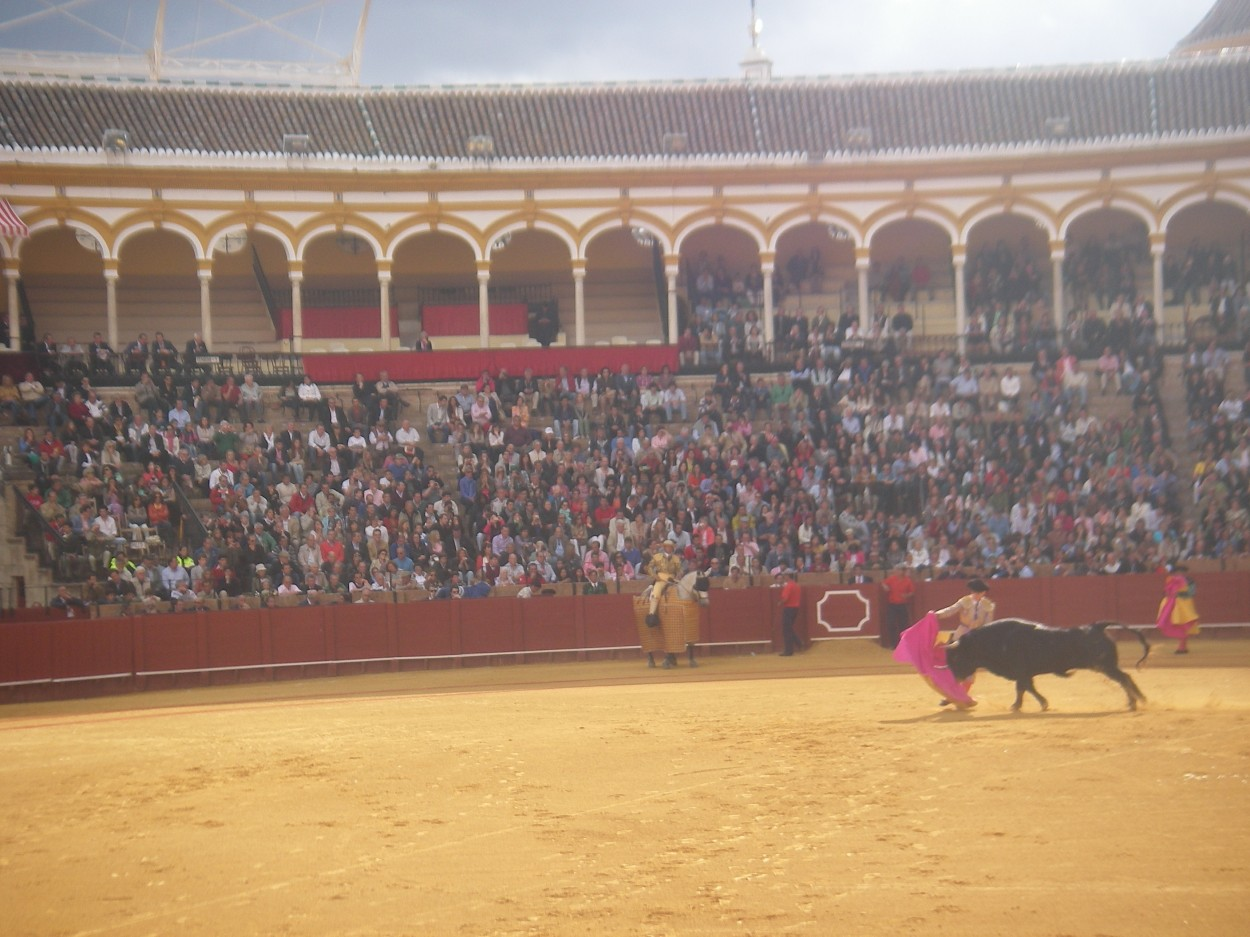 """All of us decided to go to a bull fight after learning about them in one of our classes. Even though it is not a culture class, I am still glad that I learn about the culture. My saying for learning about the culture is, """"When in Sevilla, do what the Sevillanos do."""""""