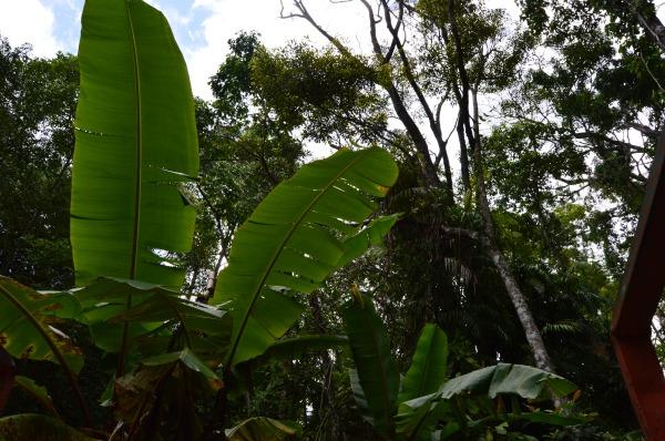 RainForeStation, Cairns, Australia-Ellanna-Photo 3, 1