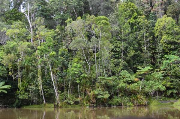 RainForeStation, Cairns, Australia-Ellanna-Photo 3, 3