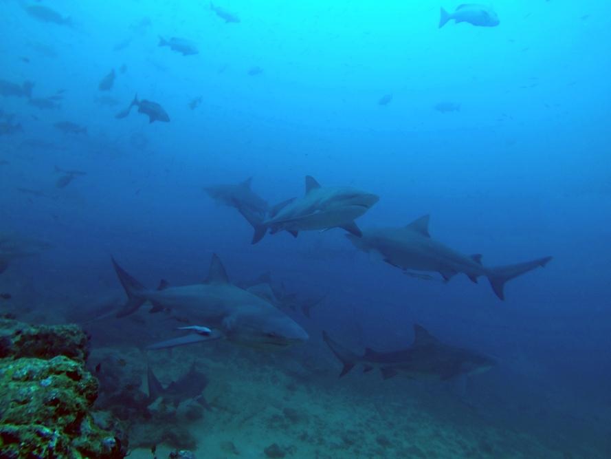 fiji-diving-research