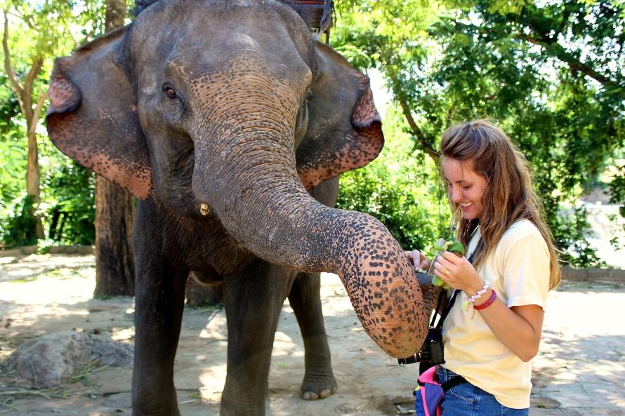 Erawan Elephants