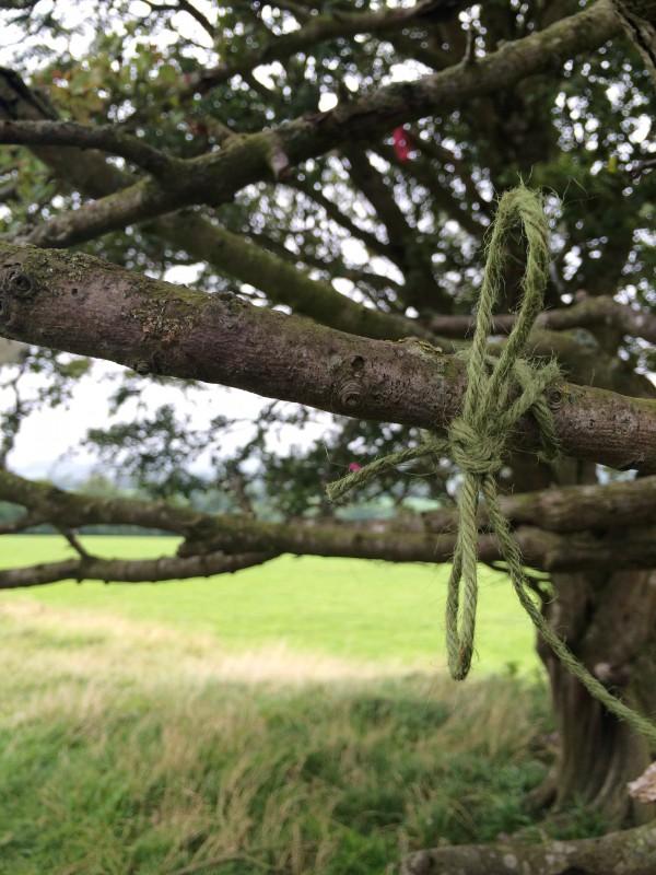Fairy tree at Hill of Tara, Co. Leinster, Ireland, Dunn-- Photo 1
