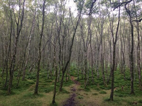 Glendalough, Co. Wicklow, Ireland, Dunn-- Photo 2