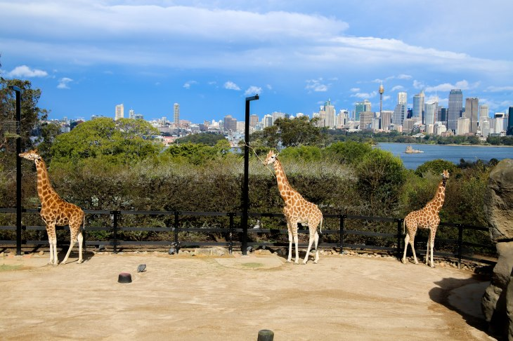 Taronga Zoo, Sydney, Australia, Renard - Photo 3
