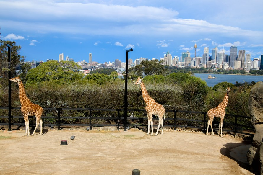 Taronga Zoo, Sydney, Australia, Renard - Photo 3