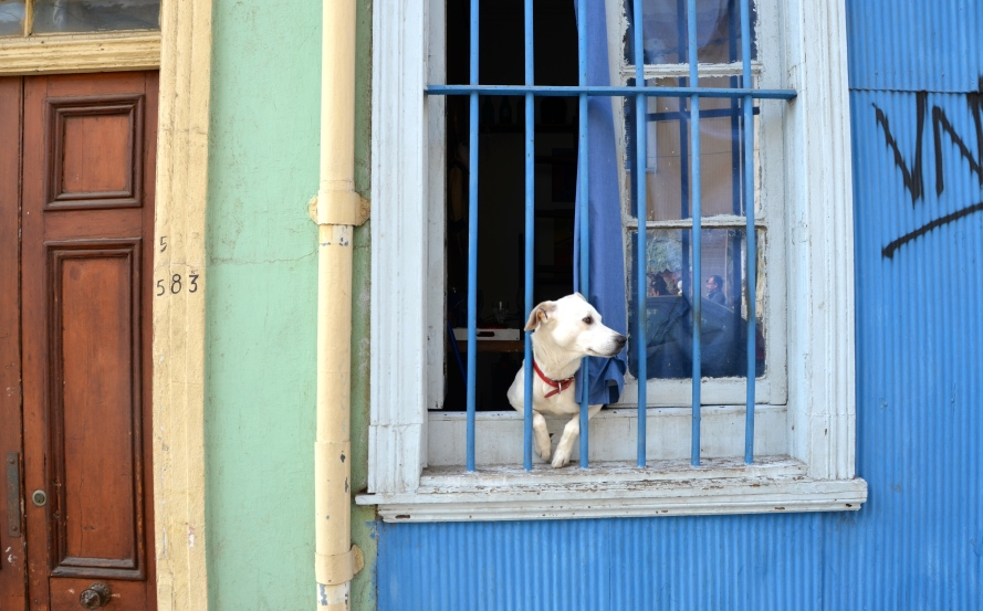 The stray dogs of Chile | ISA Student Blog