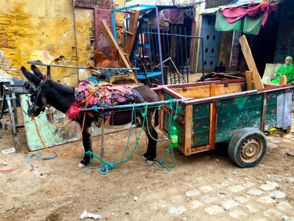 Meknes Medina, Morocco, Hardy, Photo 2