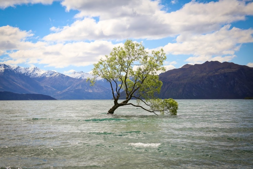 Copy of new_zealand.wanaka.fall2015.artistic_eye.that_wanaka_tree.nicole_renard.1