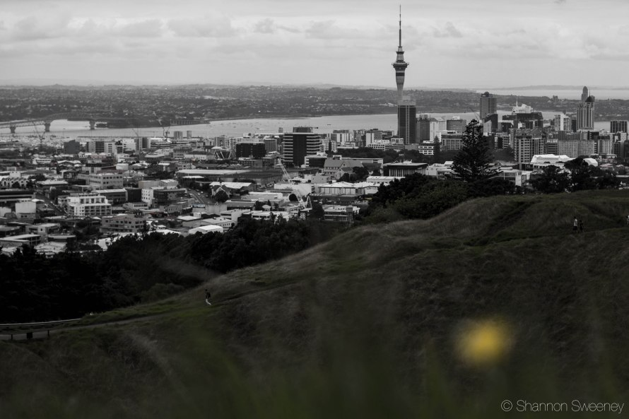 The view from the top of Mt. Eden