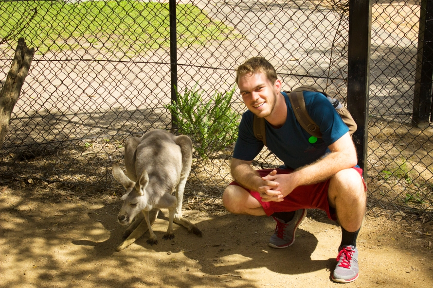 Kangaroos and Americans