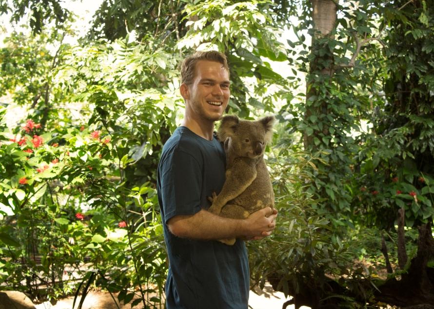 Morton the Koala