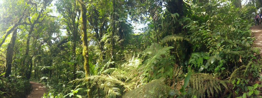 Pano of trail, Monteverde, Costa Rica - Cowell -3