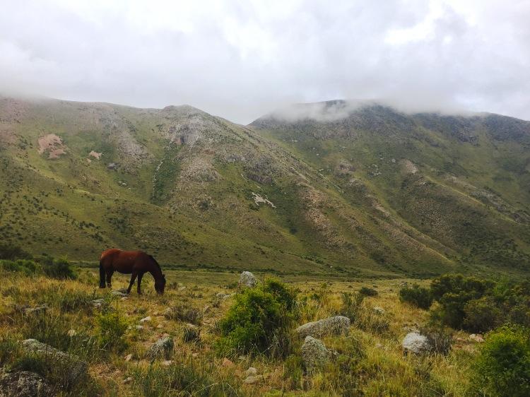 Horse grazing, Mendoza, Argentina- Pakalniskis- Photo 8