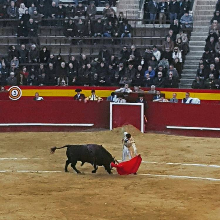 Don't worry we made it in time for the bullfight!
