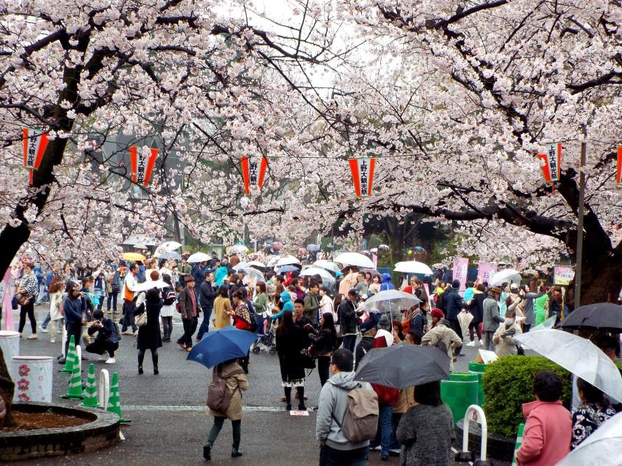 Ueno Park, Tokyo, Japan, Ditkoff - Photo 3