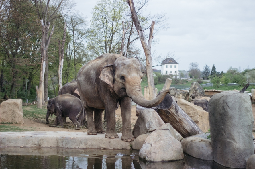 With a new baby in their midst, the elephant exhibit is one of the most popular