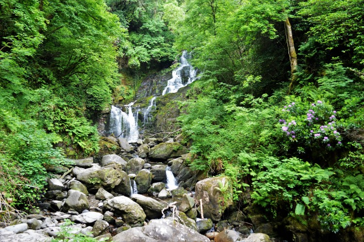 The famous Killarney waterfall, which was my favorite part of the whole day.