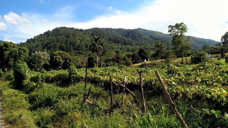 Enjoying the scenery in Jarabacoa