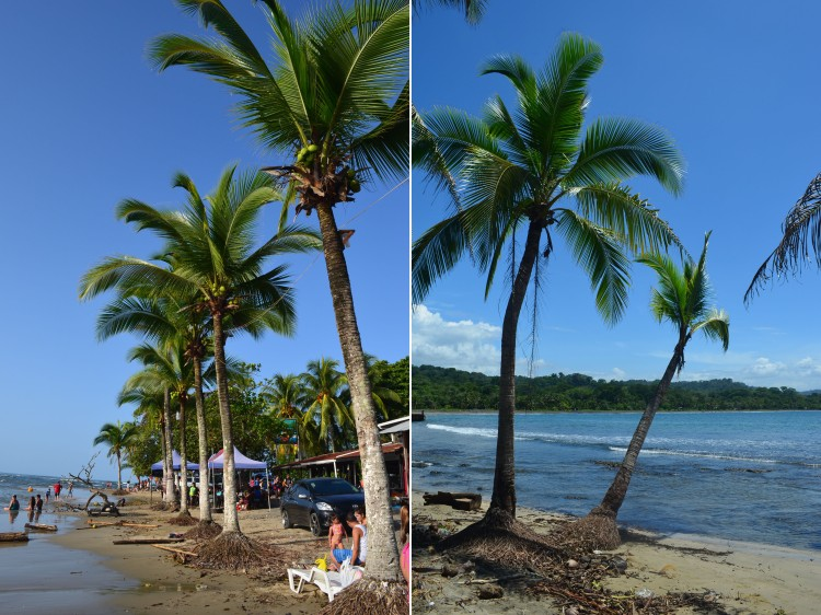 Nothing but blue skies and palm trees on the beaches in downtown Puerto Viejo