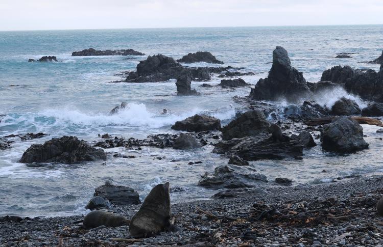 SealCoast,Wellington,NewZealand-Pahl-Photo5