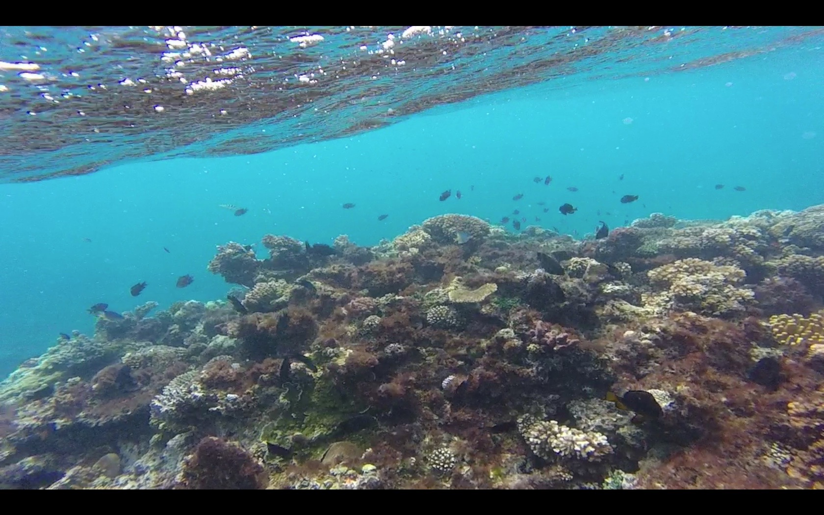 Snorkeling Adventures In Fiji Isa Study Abroad Student Blog