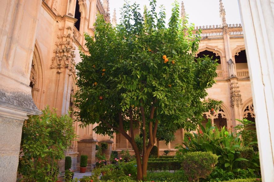 orangetree_toledo_spain_clarissafisher_photo10