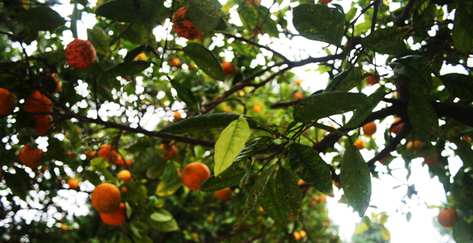 Valencian oranges can be found all around this park and do their job of adding a splash of color