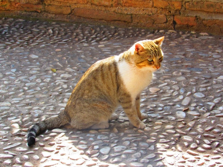 cat_granada_spain_hannasykes_photo4