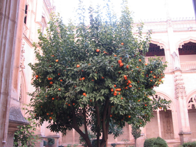 orangetree_granada_spain_hannasykes_photo7