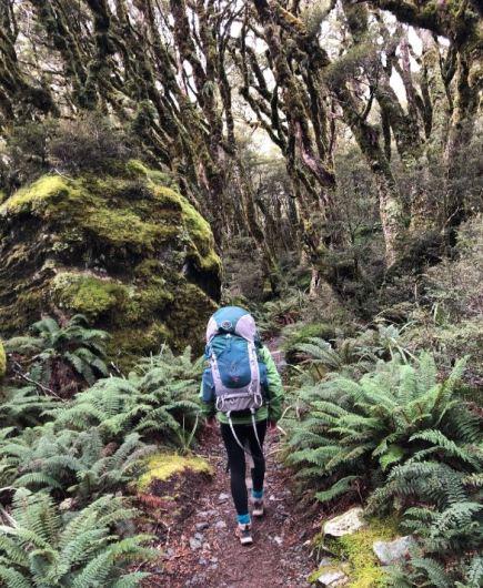 RoutburnTrackForest_NewZealand_EmilyWilcox